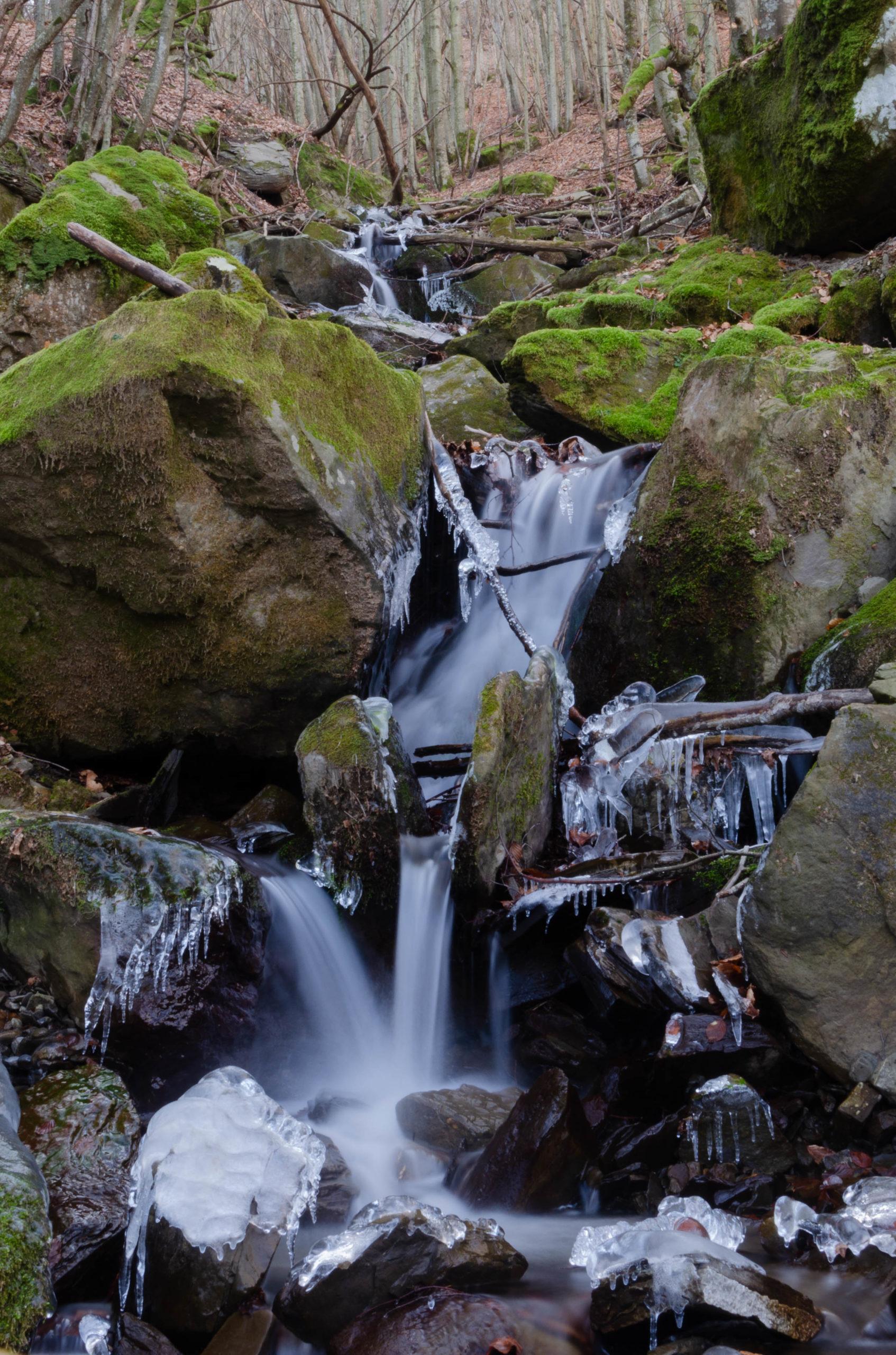Torrente nei boschi del parco del Monte Cimone
